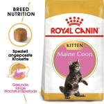 Royal Canin Kitten Maine Coon 36 | 4kg